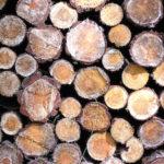 Holzfeuchtigkeit