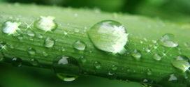 Regentanks – Für die Umwelt